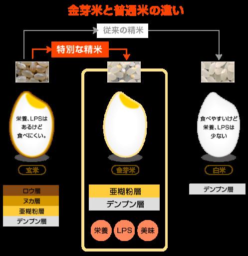 金芽米と普通米の違い