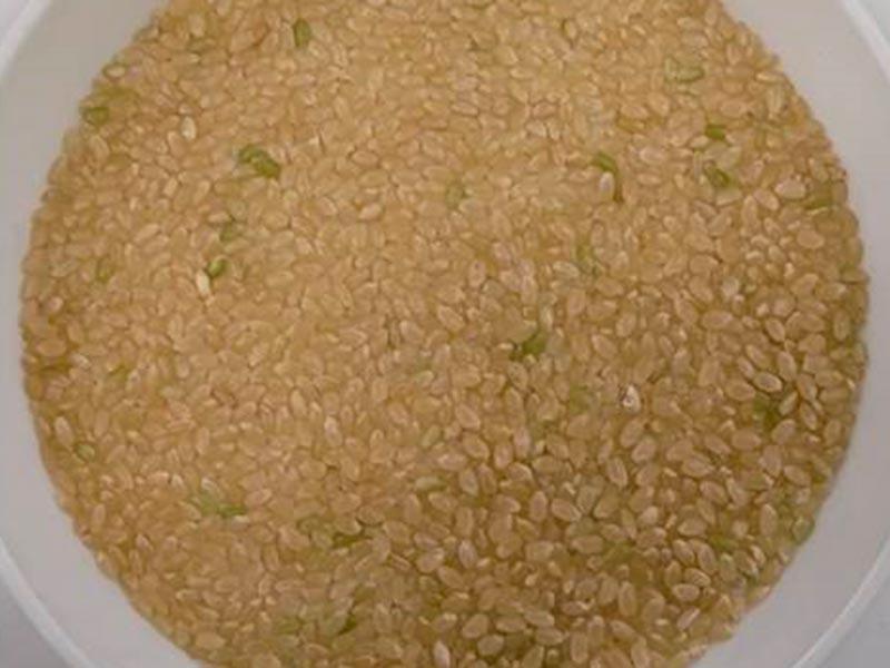 金芽ロウカット玄米炊飯前